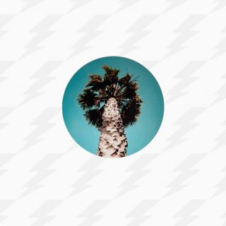 Palm Tree – Magnet